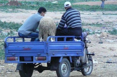 Article : Maroc : les coulisses du Aïd al-Adha